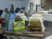 Kombucha tea, Homemade recipe, mushrooms, dining jackson hole, restaurants jackson hole, budget dining, DIY