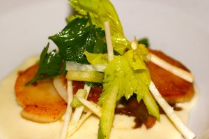 Scallops on celeriac puree