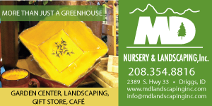 MD Nursery