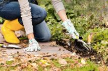 fall-gardening-8